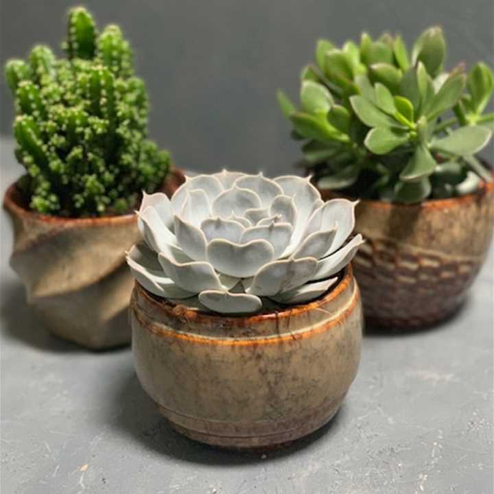 Succulents in Natural Ceramic Pot